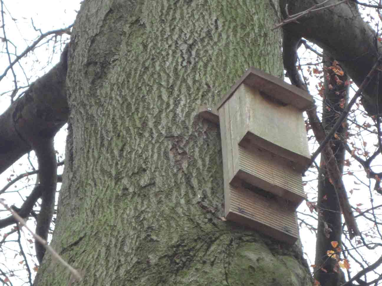Bat Box close-up