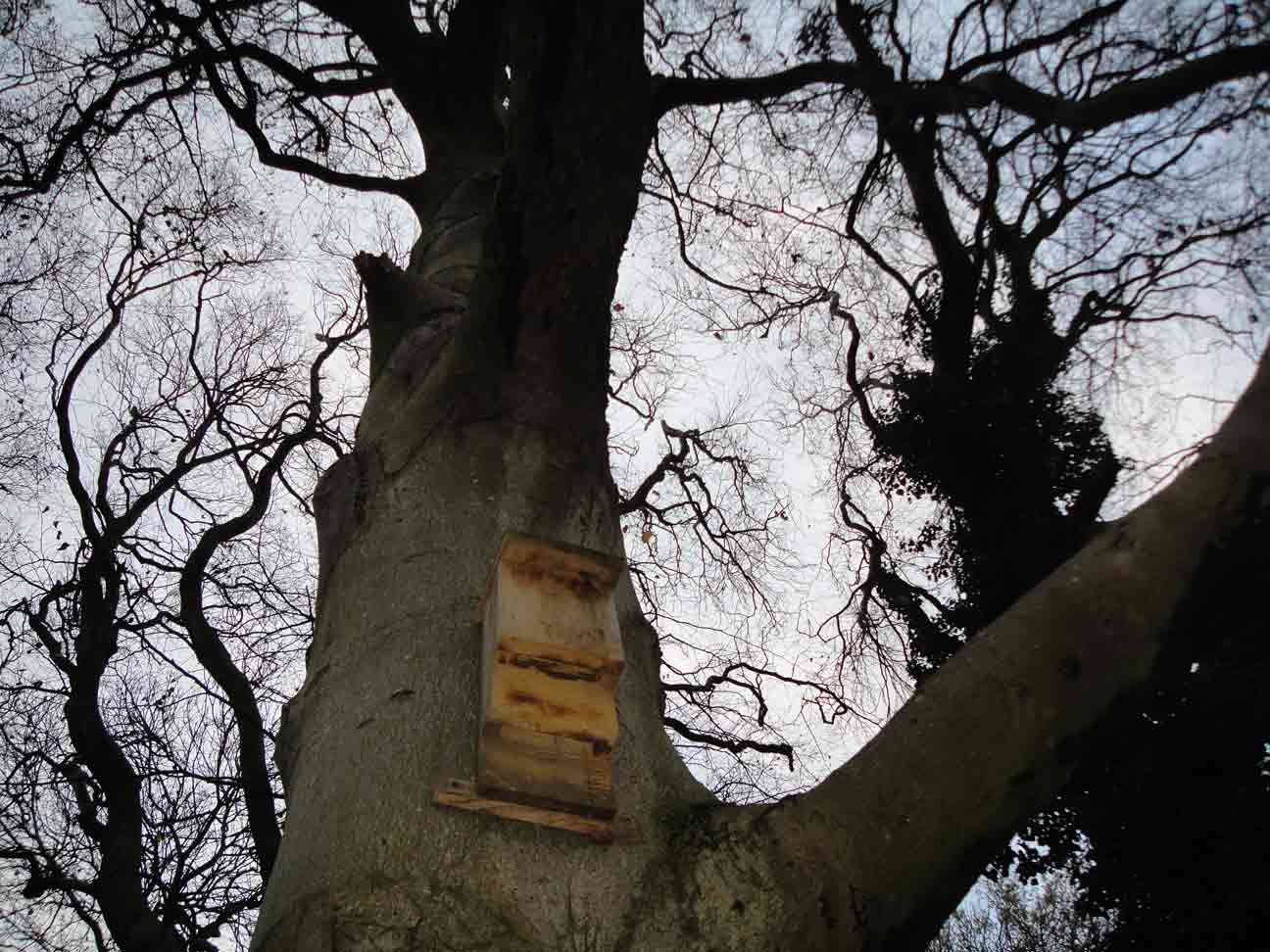 Bat Box and tree