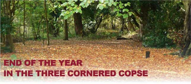 End of the Year in the Three Cornered Copse