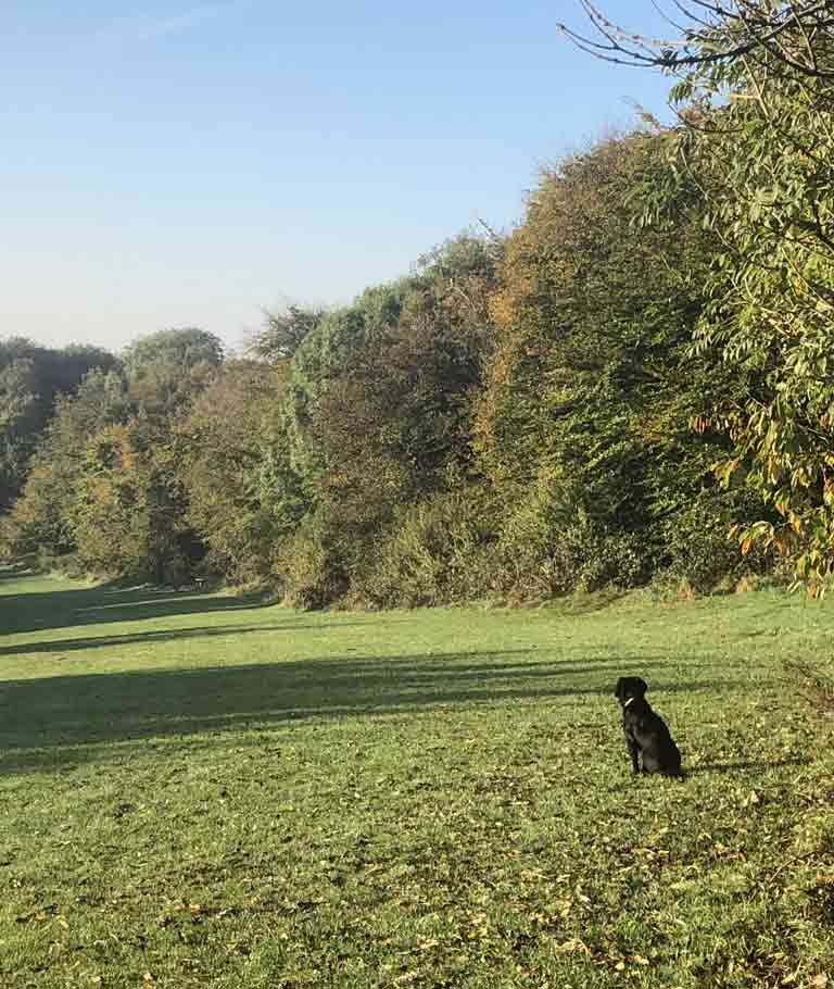 dog in copse